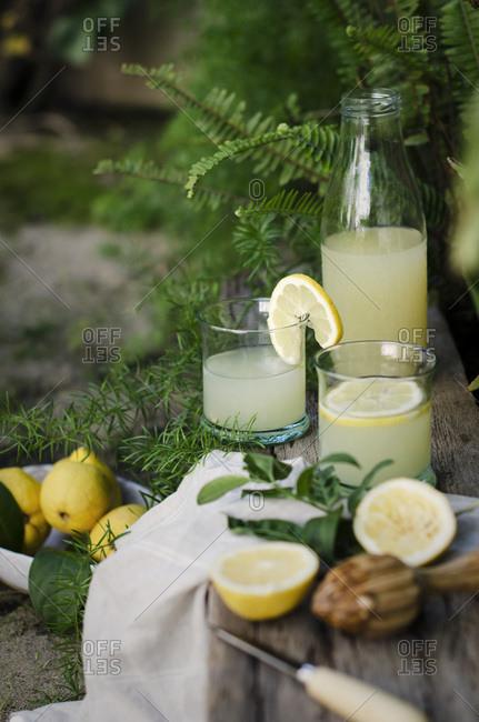 Freshly picked lemons in a garden, with lemonade