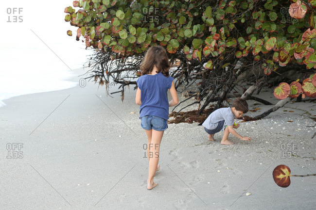 Kids collecting shells on beach