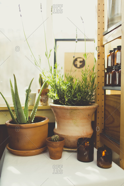 Potted lavender and aloe beside a shelf with bottles of artisan soap