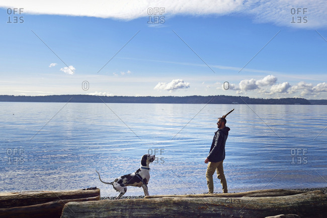 A man throwing a stick for his dog to chase, on a lake shore