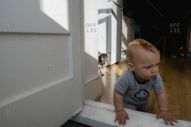 Chihuahua standing in sunlight with baby at the door