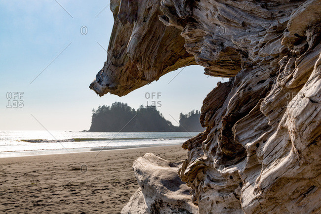 Headland at La Push Beach in the  Pacific Northwest, Washington State, United States of America, North America