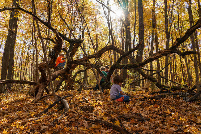 Young children playing together on a tree in the woods