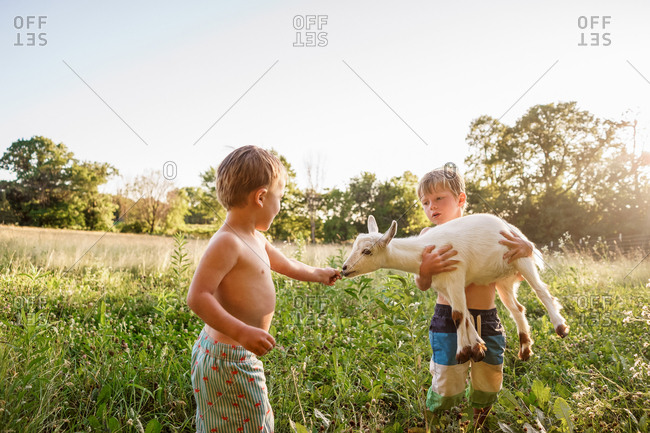 Two young boys playing with small goat on homestead