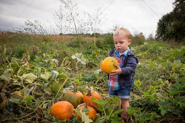Toddler boy in a pumpkin patch