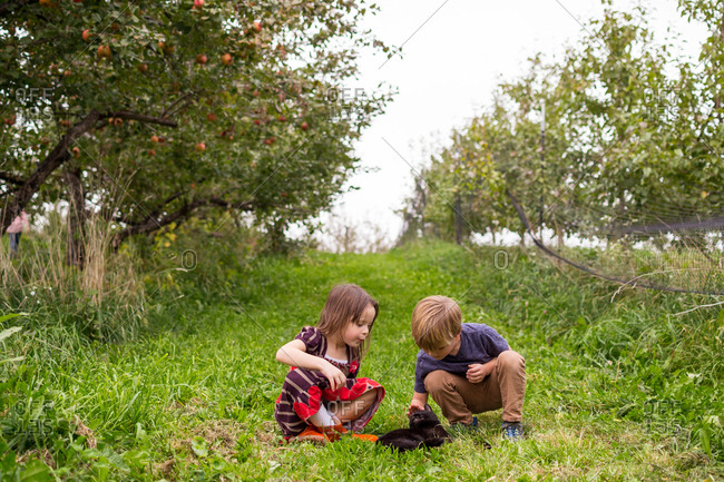 Two young children playing with cat in apple orchard