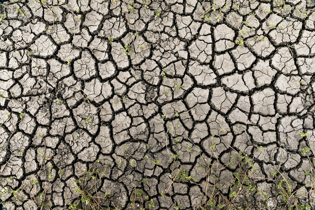 Cracked dry ground with small plants growing through the crevices