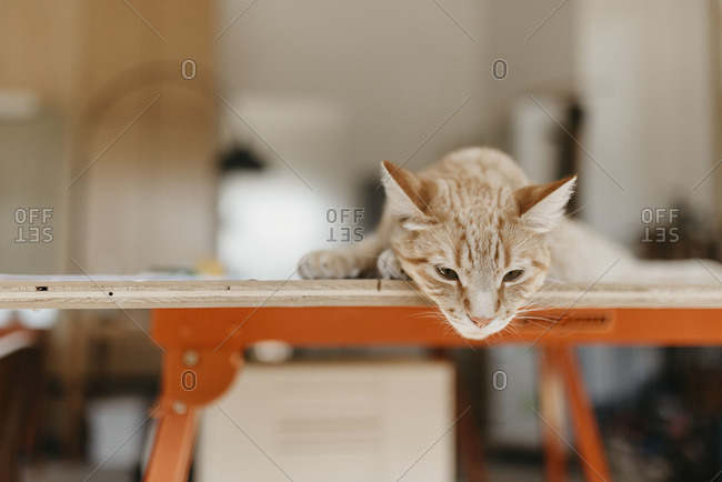 Cat Laying on Work Table