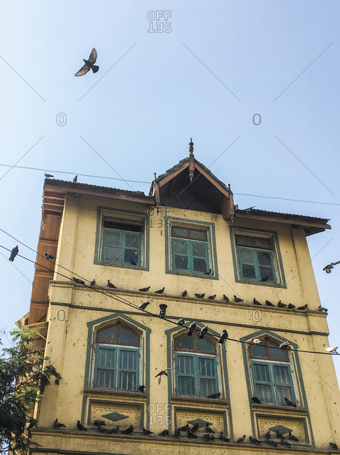 Pigeons resting on the exterior of a building in Mumbai, India