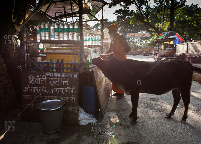 Rishikesh, India - October 20, 2015: A cow tries to buy some water from a food stand in Rishikesh, India