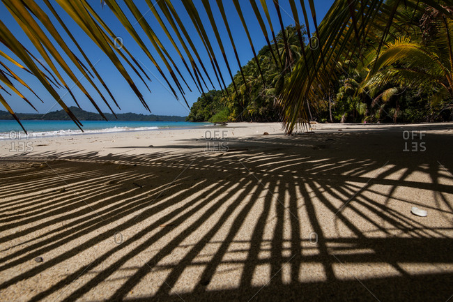 Under the shade of a coconut palm on a deserted beach in Coiba Panama