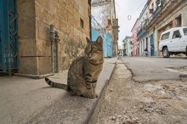 Stray cat on a sidewalk in Havana, Cuba