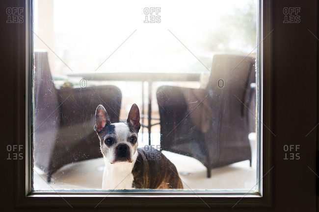 Dog looking in a glass door from outside