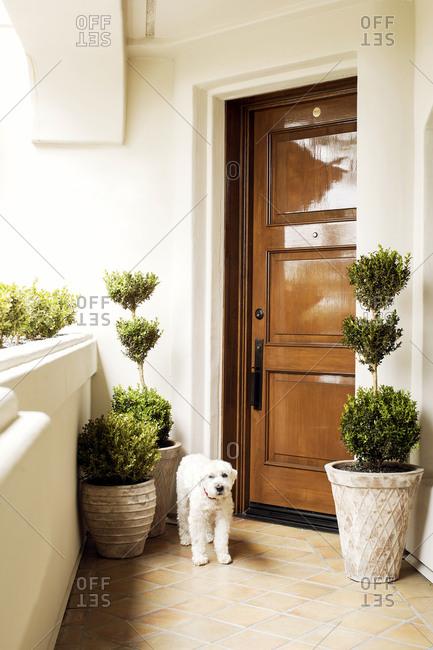 Dog standing next to front door of condo