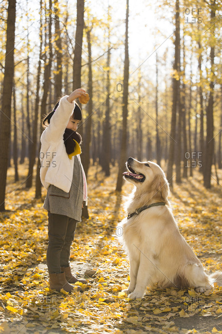 Little girl playing with dog in autumn woods