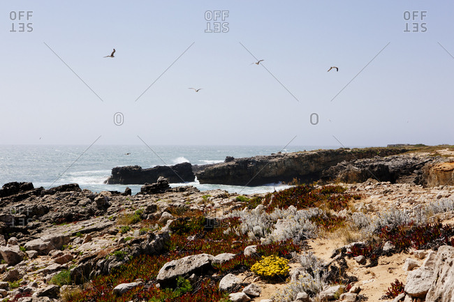 Birds flying over rocky coast in Portugal