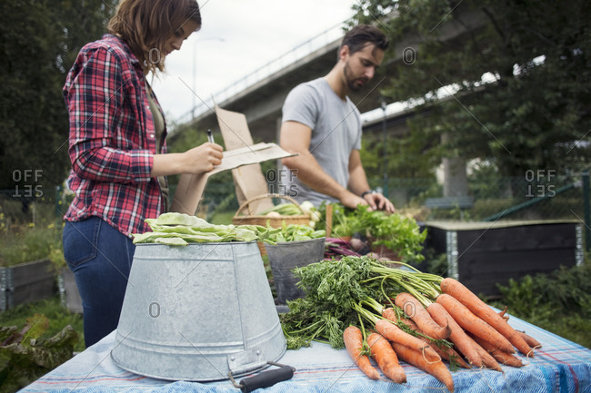 Mid adult couple working at table full of harvested carrots at urban garden