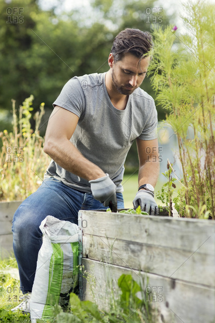 Mid adult man planting in community garden