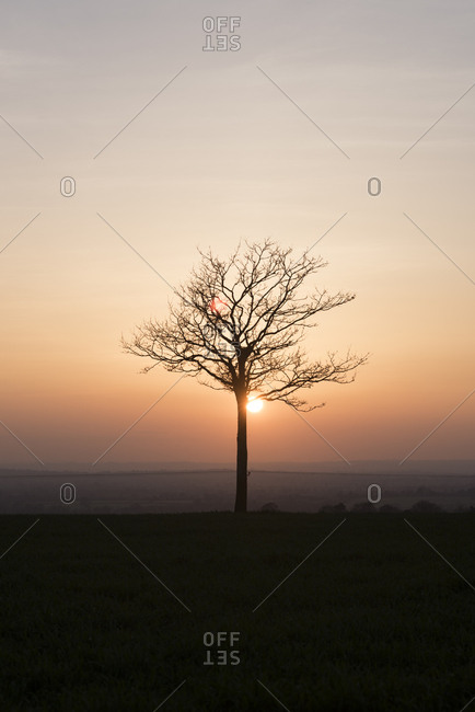 Sun setting behind a single tree on a hill