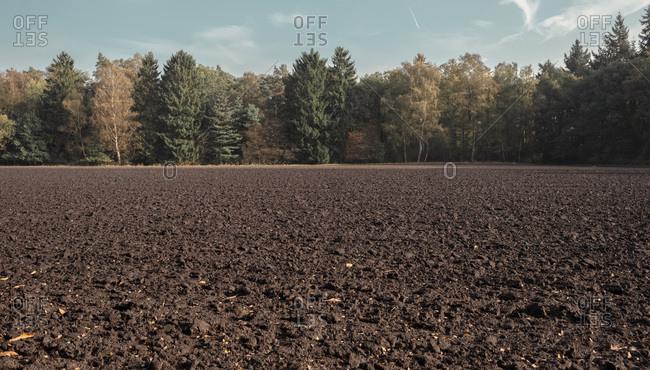 Plowed farmland with row of autumn trees.