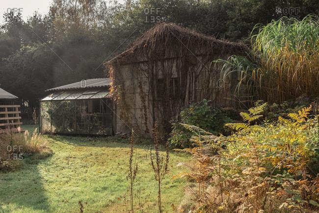 Barn and small greenhouse in autumn backyard.