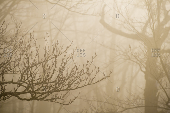 Italy- Umbria- Apennines- Motette- Forest on a foggy day in Winter