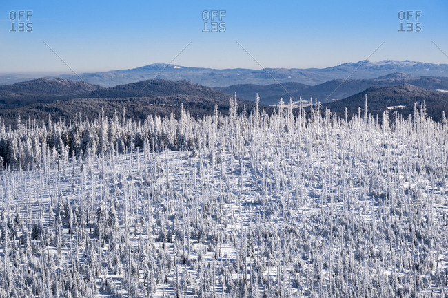 Germany- Bavaria- view from Lusen at snow-covered Bavarian Forest with natural regeneration