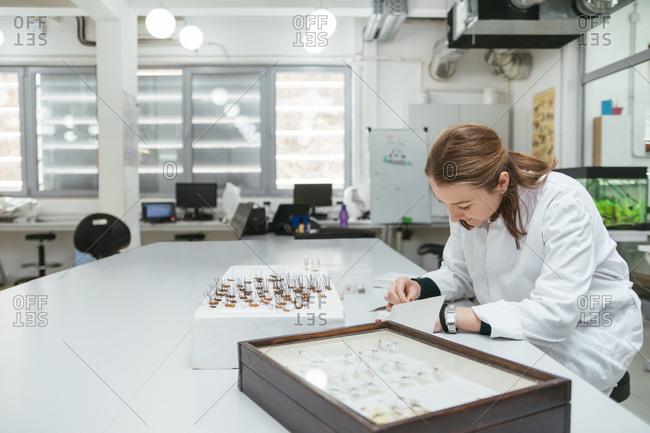 Laboratory technician working in biology lab