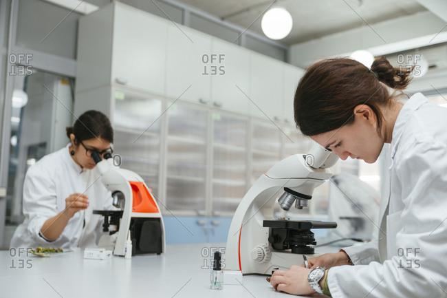 Laboratory technicians using microscopes in lab