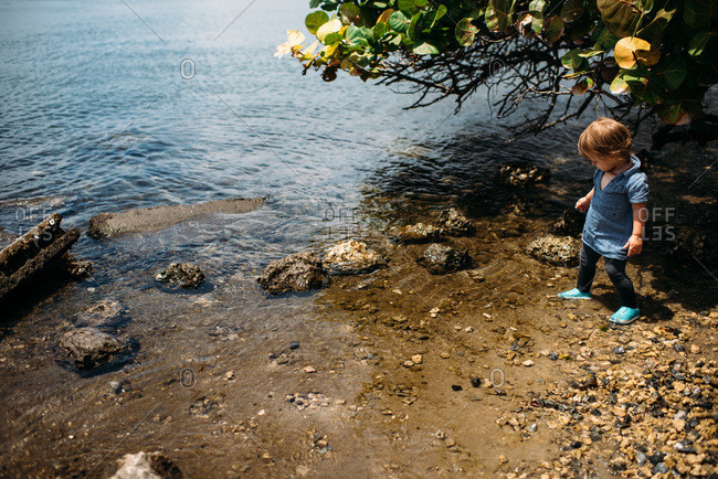 Toddler girl standing in shallow water looking down at rocks.