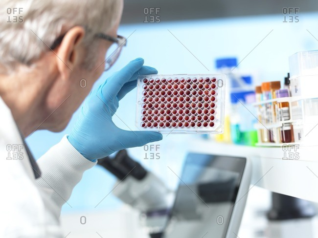Scientist preparing multi well plate containing blood samples for testing and analysis in the laboratory