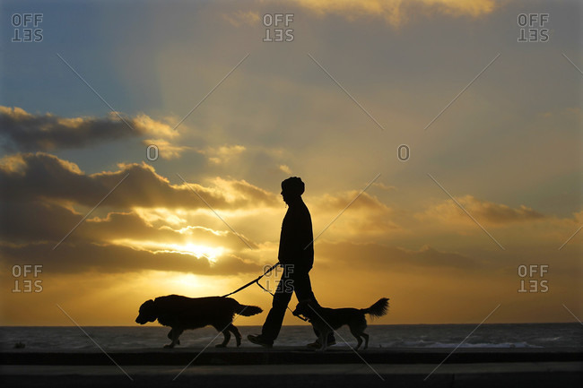 San Diego, CA, USA - January 31, 2016: A person walks their dogs as the sun sets at Windansea Beach in the La Jolla neighborhood of San Diego, California.
