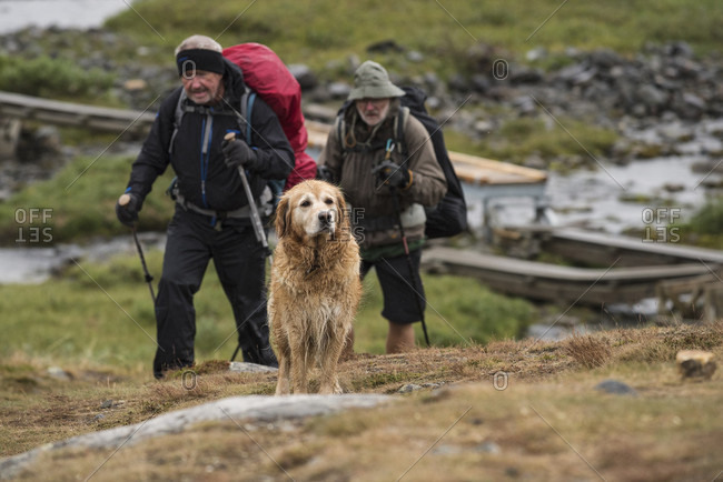 Kungsleden Trail, Lapland, Sweden - September 5, 2015: Dog and wet hikers approach S_lka hut, Kungsleden trail, Lapland, Sweden