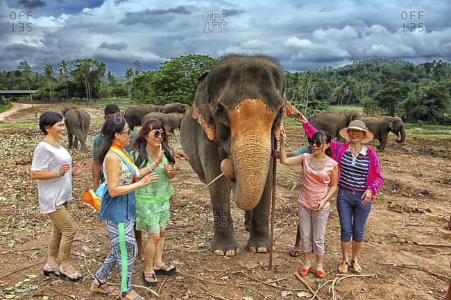 Elephant Orphanage, Pinnawela, Sri Lanka - September 14, 2015: Sri Lanka - tourist doing a picture with an elephant, Pinnawela Elephant Orphanage (Sabaragamuwa Province of Sri Lanka), Asia