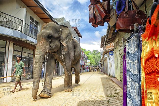 Elephant Orphanage, Pinnawela, Sri Lanka - September 14, 2015: tourists looking at elephant bath, Pinnawela Elephant Orphanage for wild Asian elephants