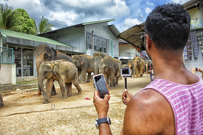 Pinnawela Elephant Orphanage, Pinnawela , Sri Lanka - September 14, 2015: tourists looking at elephant bath, Pinnawela Elephant Orphanage for wild Asian elephants