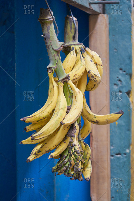 Branches with ripe bananas hanging from a beam