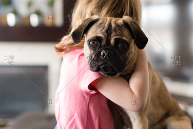 Cute dog being hugged