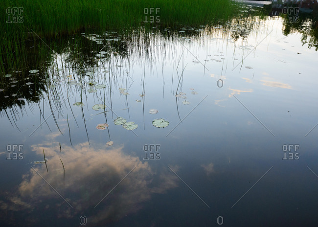 Clouds reflecting in lake with lily pads