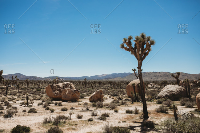 Desert landscape at Joshua Tree National Park
