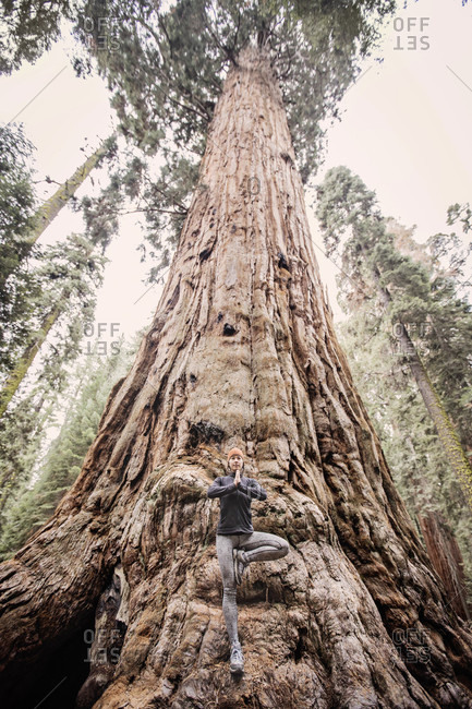 A Woman Practices Yoga Under The Giant Sequoia In The Sierra Nevada, California