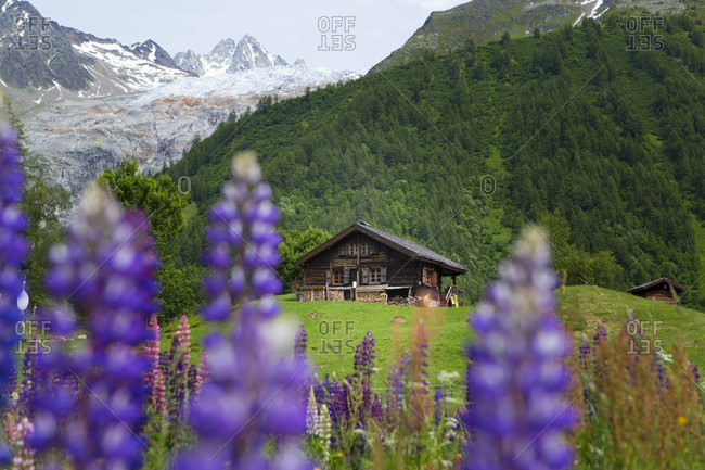 An Old Wooden Hut In A Mountain Meadow In The Chamonix Valley