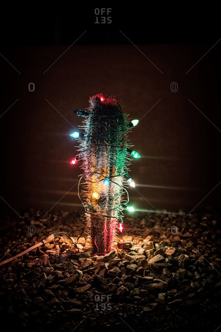 A Cactus Covered In Christmas Lights