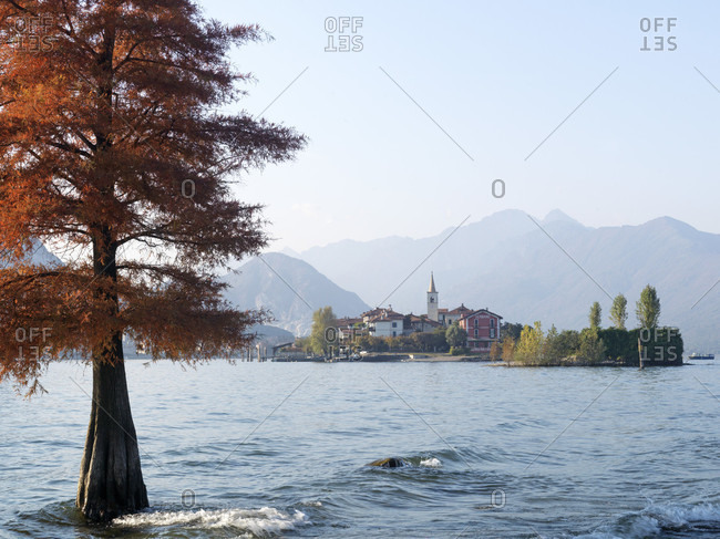View past tree and Lago Maggiore to Stresa from Isola Bella