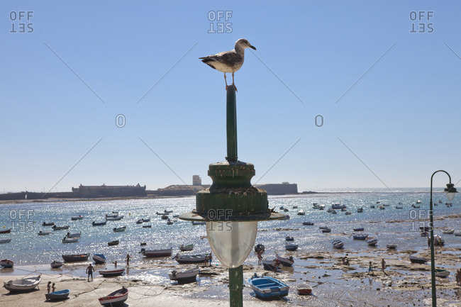 Andalusia, Spain - September 3, 2014: Sea gull, people, and boats at La Caleta Beach in the historical town of Cadiz