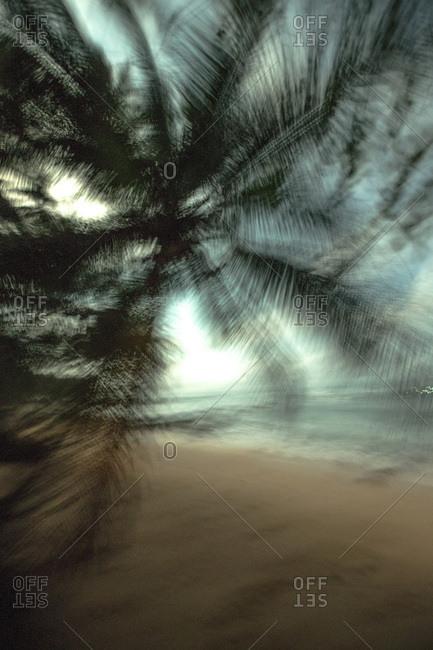 Palm tree by the sea, Sao Tome, Sao Tome and Pr�ncipe, Africa