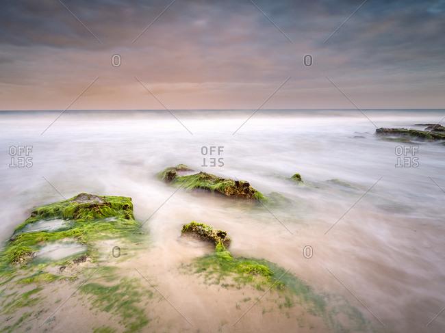 Coastal landscape of seaweed covered rocks and  pink sky.