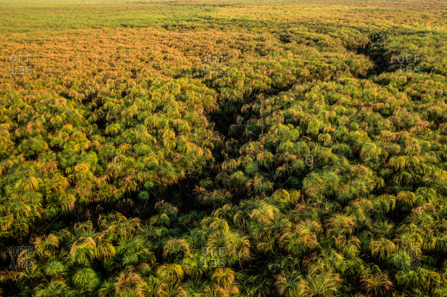 An aerial view of forest in Botswana's Okavango Delta.