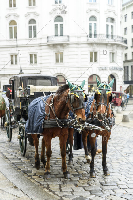 Traditional horse carriage in Vienna, Austria.