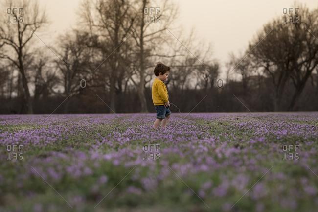 Little boy peeing in a field of wildflowers